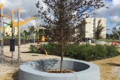 Betoninis suoliukas aplink medį